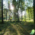 Visite de l'Arboretum et promenade forestière
