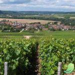 Randonnée « Le Chemin Du Vigneron »