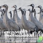 Escapade naturaliste : Découverte ornithologique