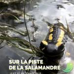 Escapade naturaliste : Sur la piste de la salamandre