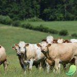 Visitez les fermes d'Othe et d'Armance !!!