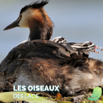 Evasion nature : Les oiseaux des lacs