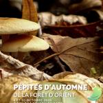 Escapade naturaliste : Pépites d'automne de la Forêt d'Orient