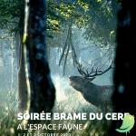 Soirée brame du cerf à l'Espace Faune de la Forêt d'Orient