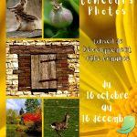 Exposition: Best Of concours photos