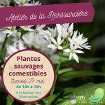 Atelier Ressourcière : Plantes sauvages comestibles