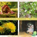 Plantes sauvages comestibles et danse/relaxation