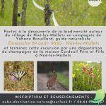 Excursion nature et champagne