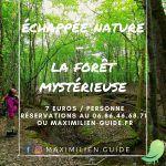 Échappée nature: la forêt mystérieuse